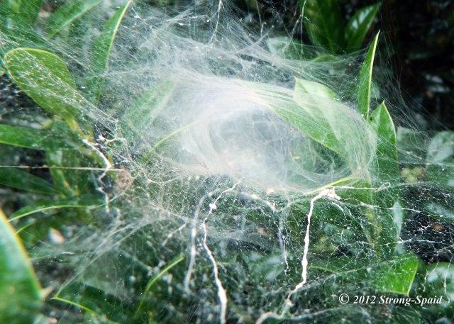 Spidery_2