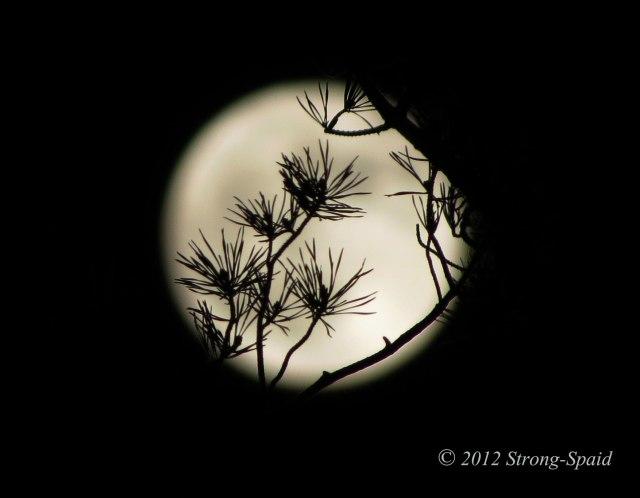 Pine-tree-moon