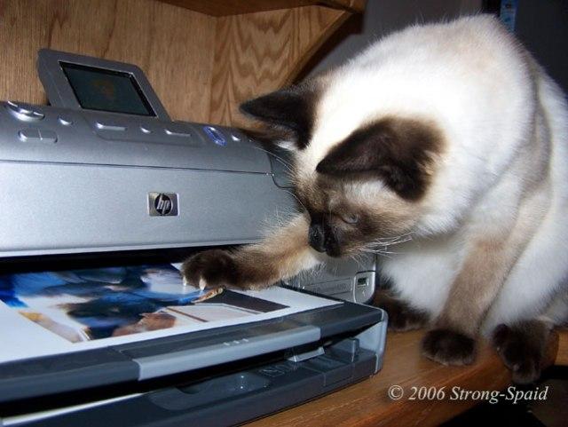 printer-cat