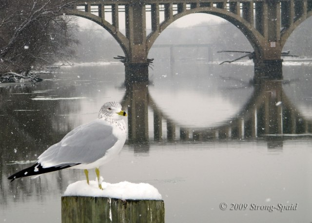 bird-and-bridge