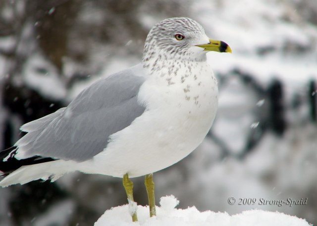 bird-in-snow