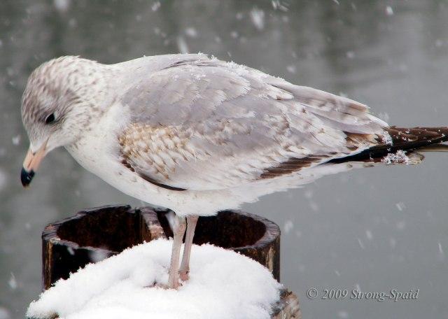 Cold-Bird
