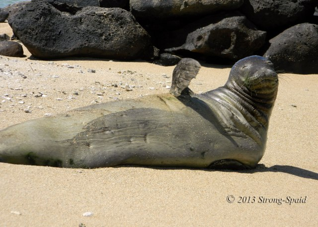 Hawaiian-Monk-Seal