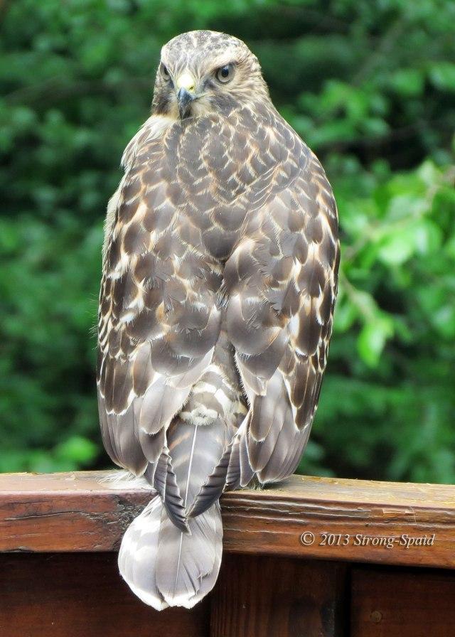 Hawk-Thinking