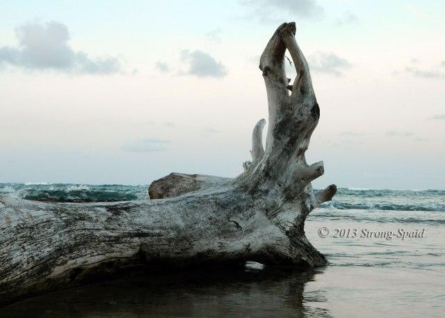 Driftwood-Yoga
