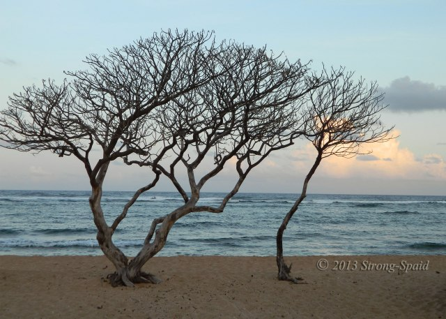 Trees-on-the-beach