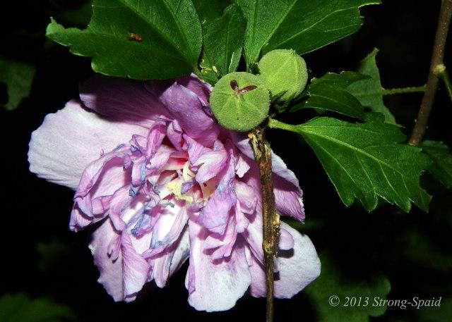 Dark-Flowers