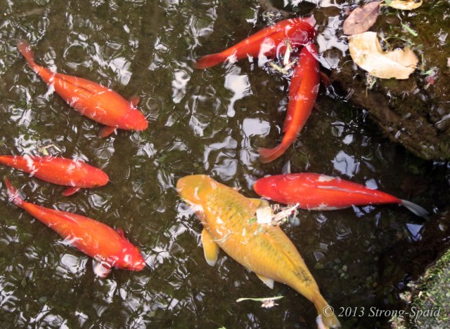 Fish-Meeting