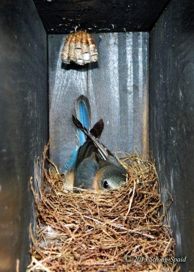 Luxury-Blue-Bird-house