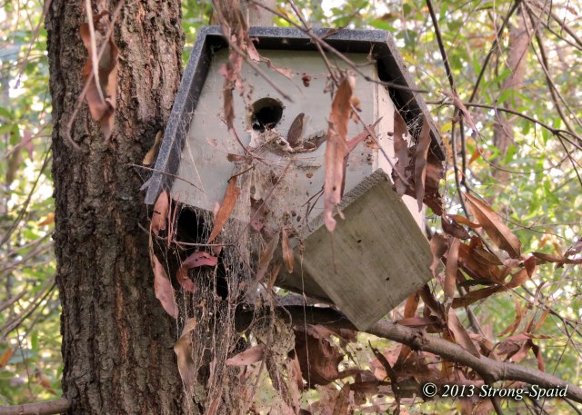 Spider-bird-house