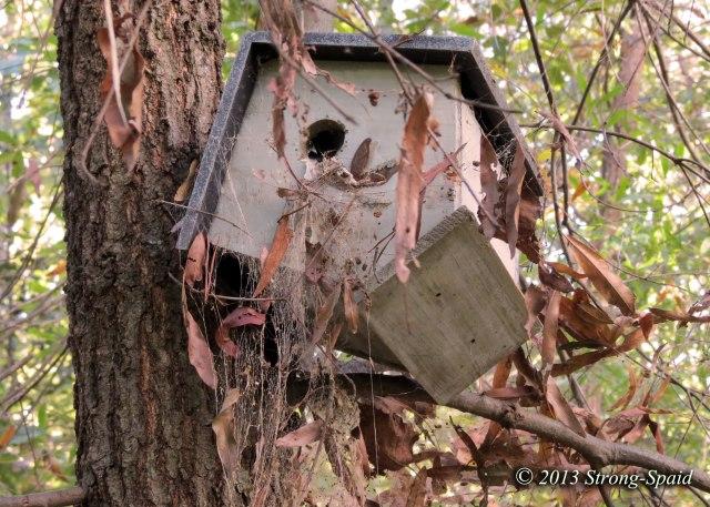 Spider-bird-house
