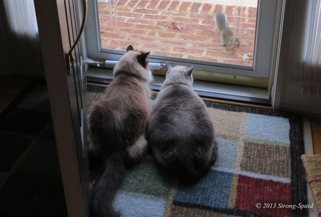 Squirrel-loves-cats