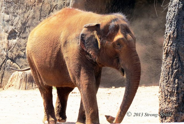 2014-elephant-walk