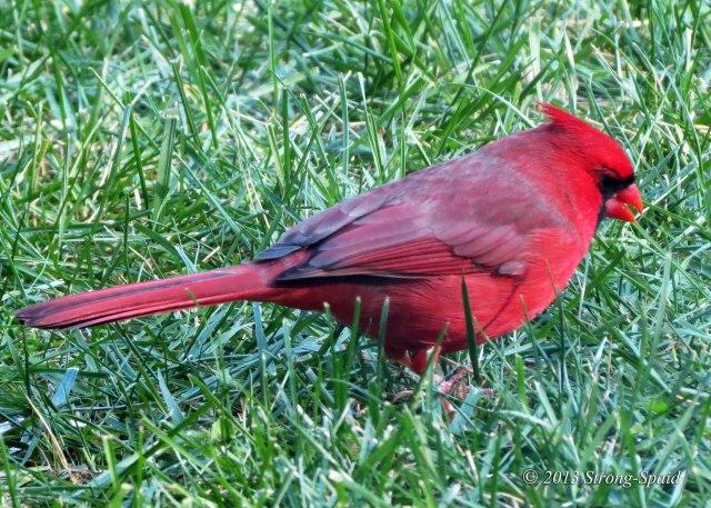 Cardinal-speaking