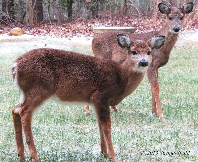 Deer-Cold