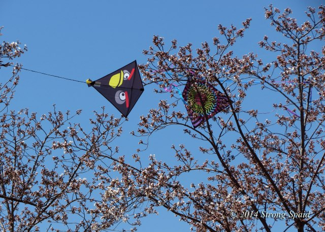 Kite-stuck-in-tree
