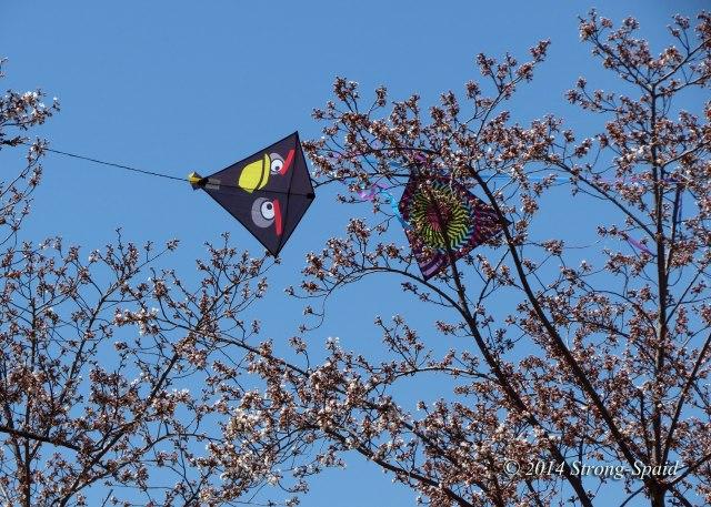 Kite-stuck-in-tree