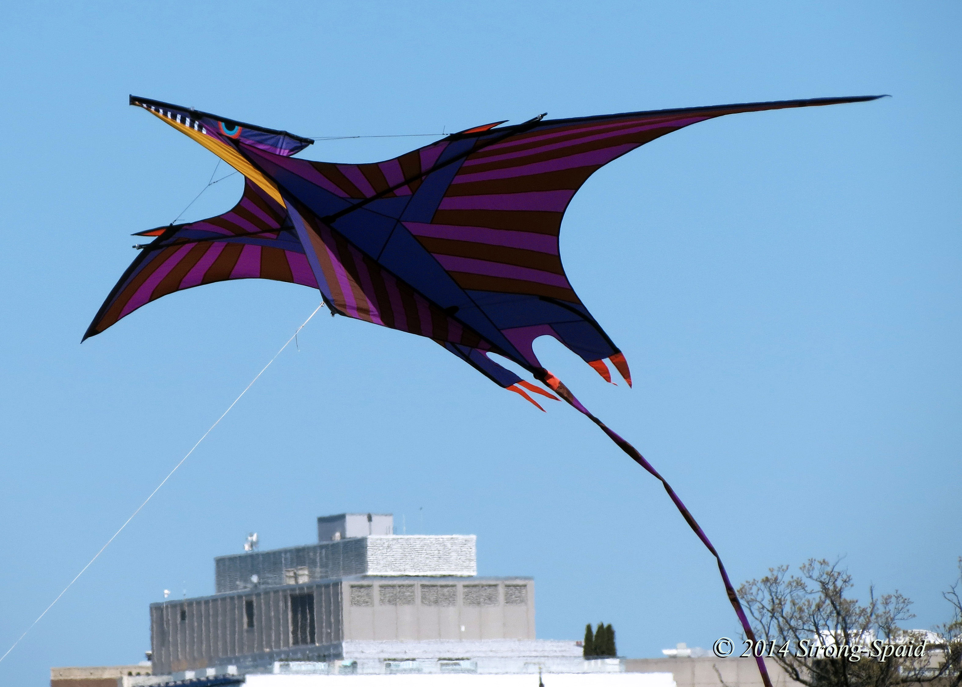 plight of the kites before i forget pterodactyl kite