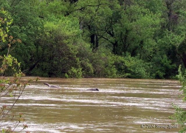 Rappahannock-River_4