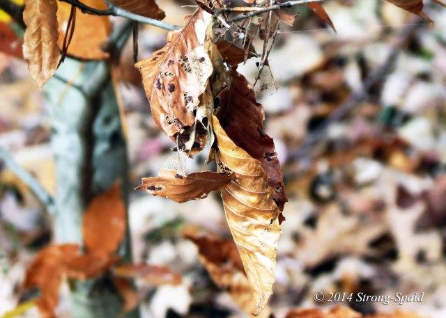 Dying-Leaf_2