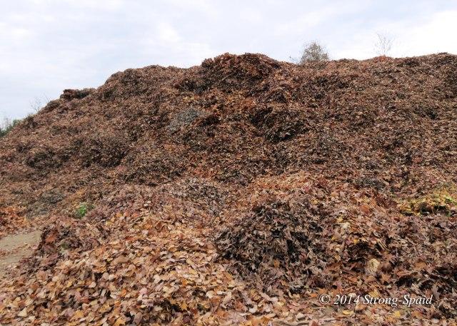 Leaf-Dump