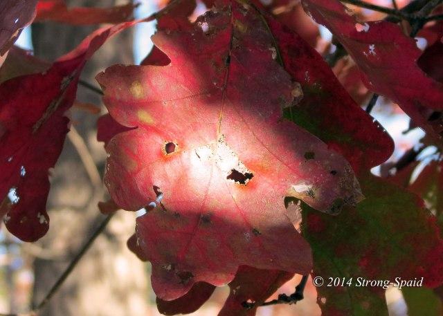 Leaf-Eyes