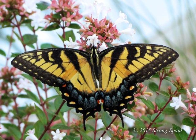 Seasons-Butterfly