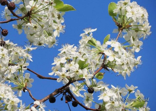 Mississippi-blooms