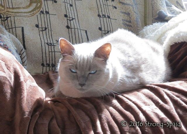 cat-wisdom_4