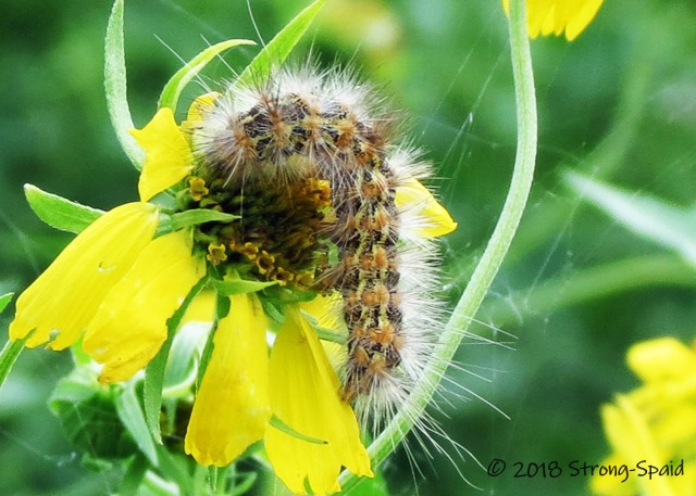 Caterpillar_2